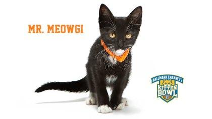 meowgi