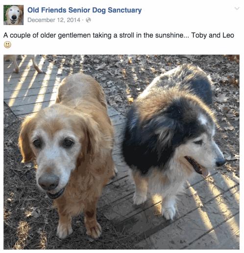 Old Friends Senior Dog Sanctuary Leo